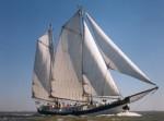 Mitsegeln bei der HanseSail 2021